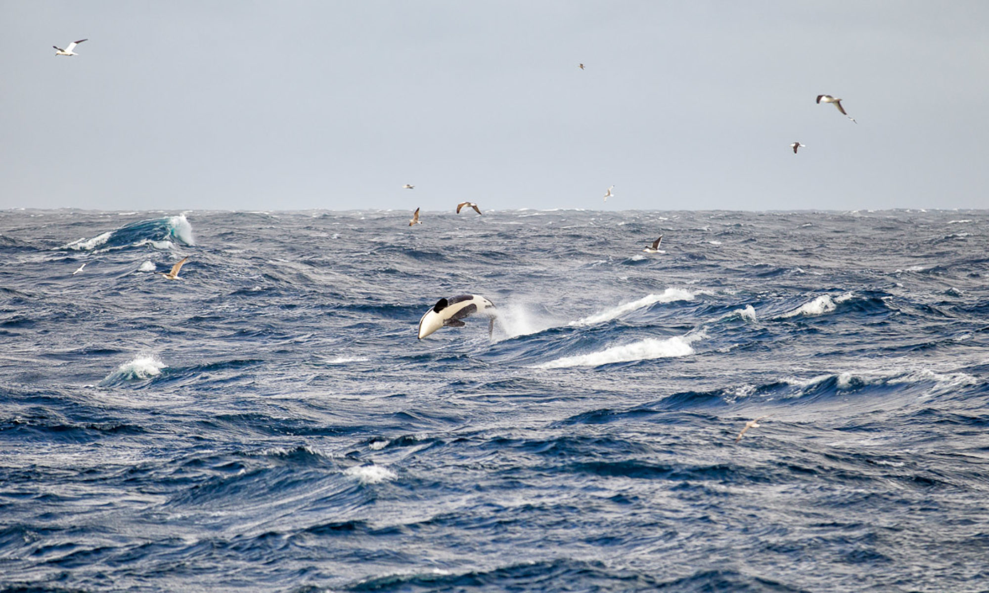 Keep Whales Wild