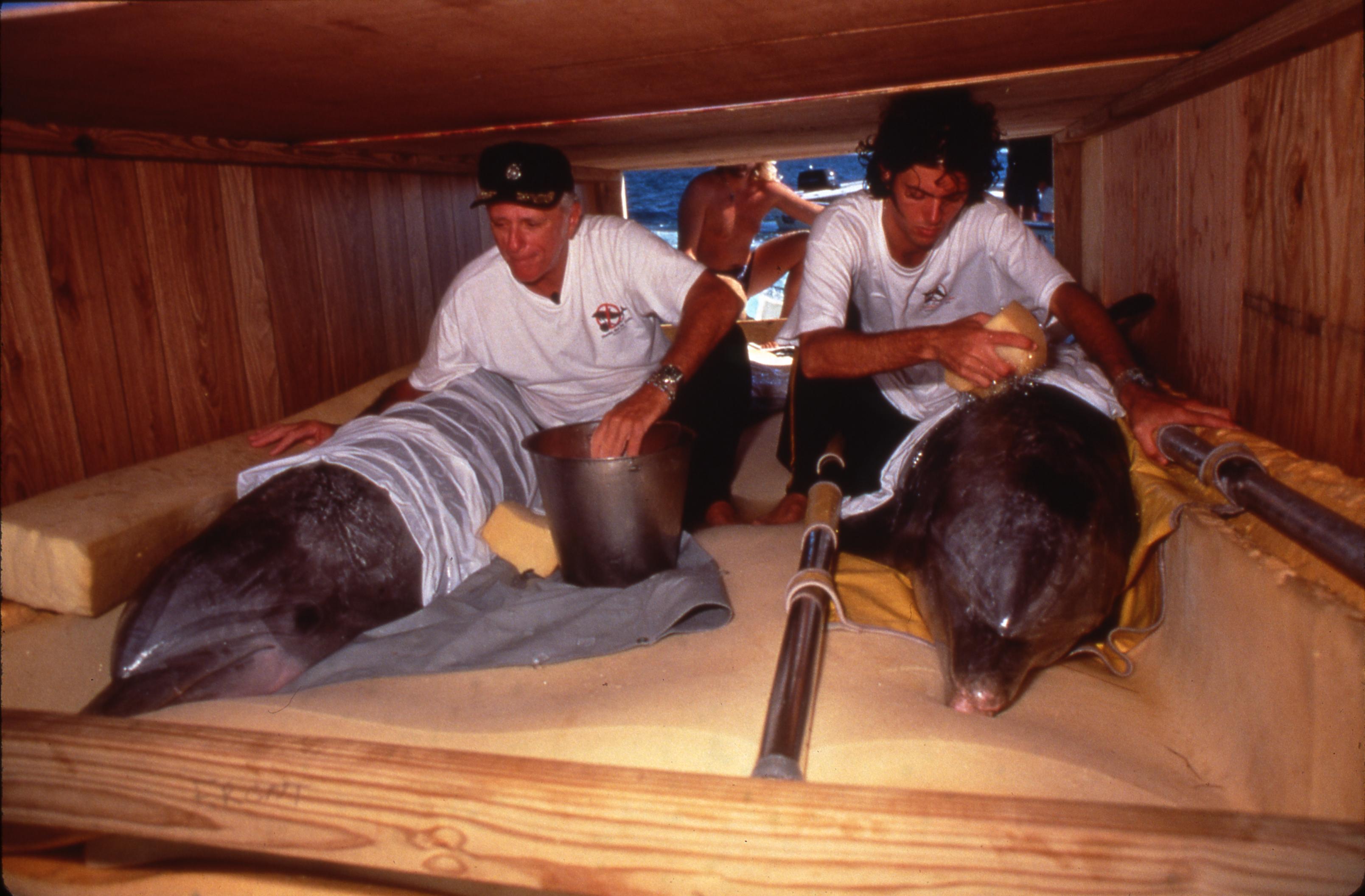 Ric O'Barry et son fils, Lincoln, réhabilitant deux dauphins captifs. Droits : Dolphinproject.net